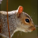 Round Rock Squirrel Removal